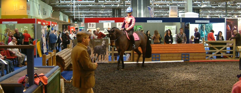 BETA Show - Equestrian Exhibition